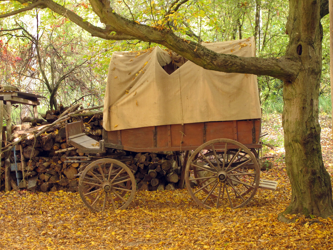 A covered wagon under a tree in Autumn